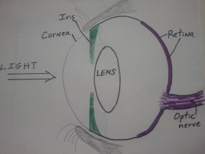 Eye Diagram for Cataracts