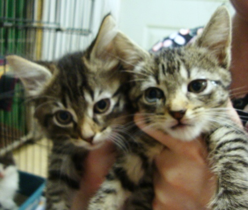 Squan Animal Hospital / Kittens for Adoption / NJ