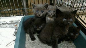 kittens2016